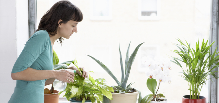 घर में यह पौधे लगाने से तनाव होगा कम और आप ले पाएंगे पूरा विश्राम