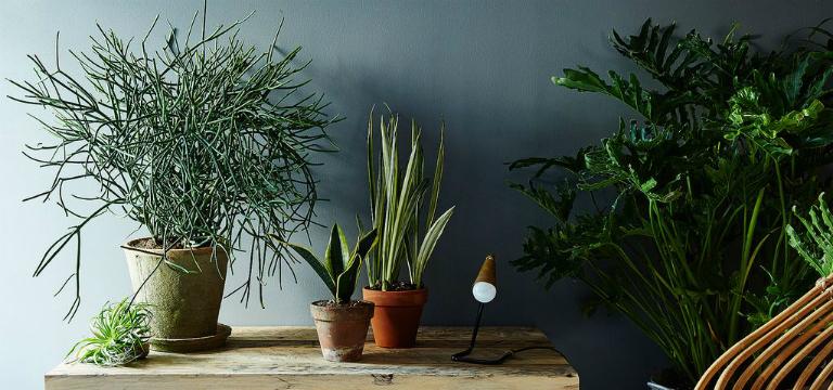 पौधों के जरिये इस तरह बढ़ाएं अपने घर की सुन्दरता को