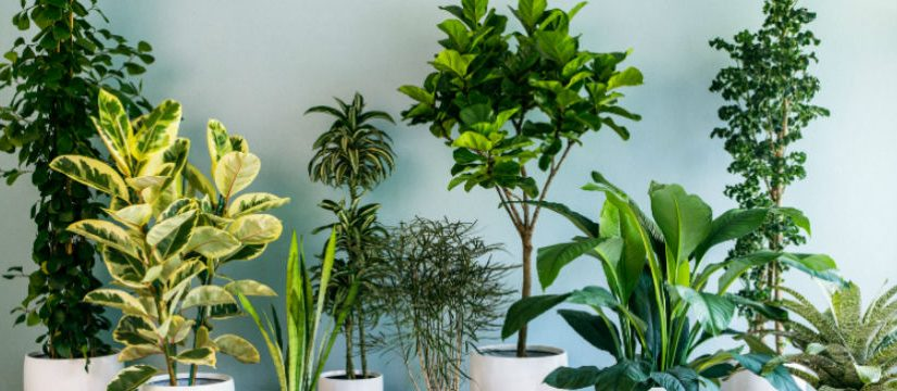 Seed these Indoor Plants to Purify Your Home